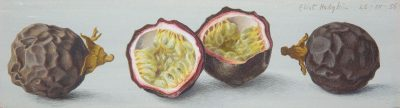 Eliot Hodgkin (1905-1987)Passion Fruit -